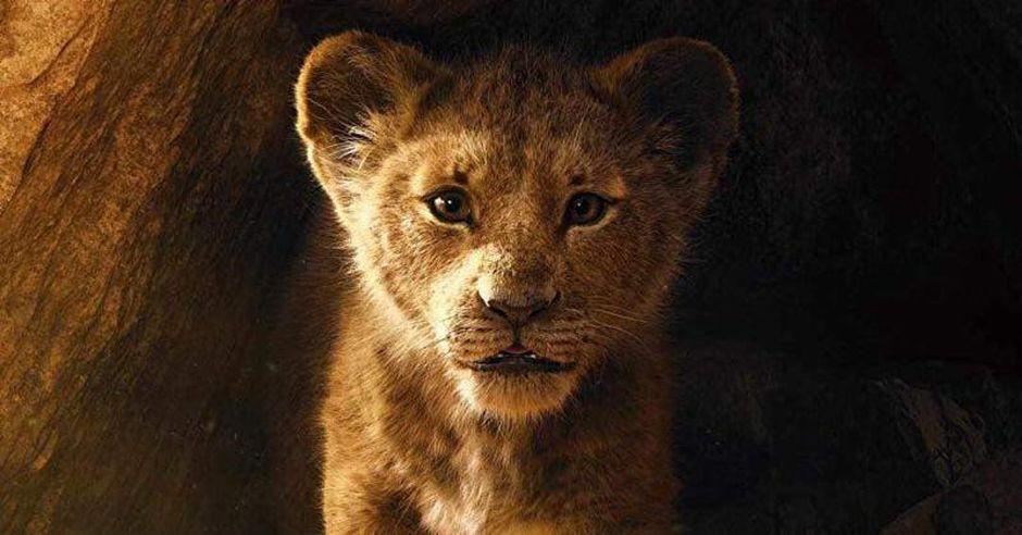 simba, the lion king 2019